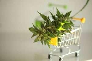Buy Marijuana MMJ Card