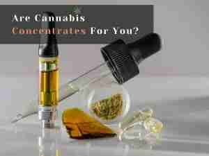 Are Cannabis Concentrates For You