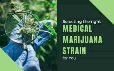 Selecting The Right Medical Marijuana Strain For You