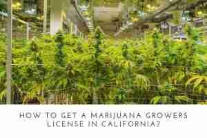 How To Get A Marijuana Growers License In California