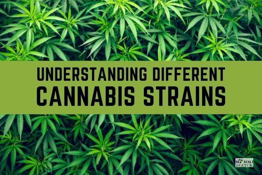 Understanding different cannabis strains